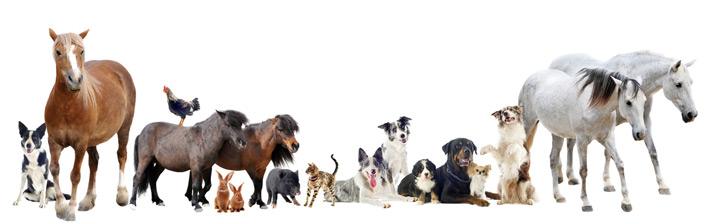 hunde-katzen-pferde